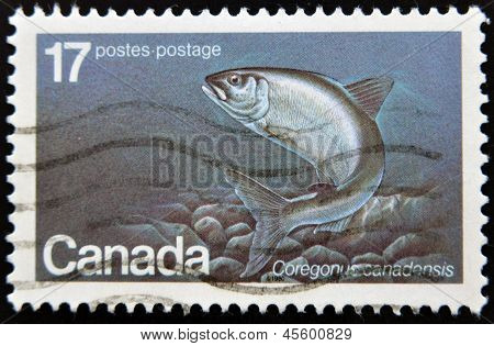 Canada - Circa 1980: A Stamp Printed In Canada Shows Coregonus Canadensis, Circa 1980