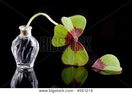 Unlucky Leaf