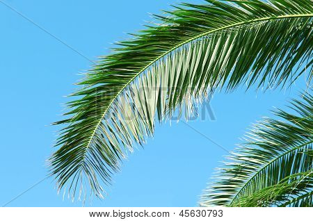 Palm Branch On Background Of Blue Sky
