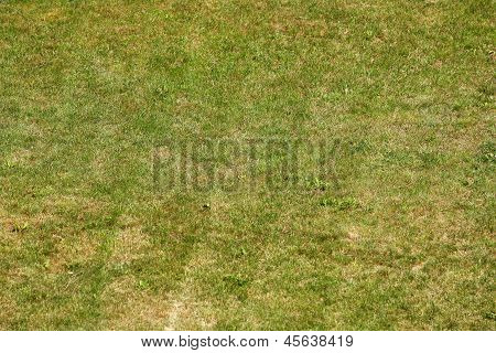 Green Grass Freshly Mown Background