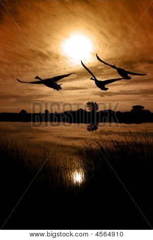 Canadian Geese Silhouette