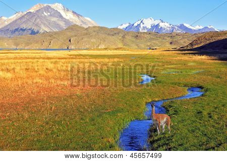 The solitary Estancia in the national park Perito Moreno in Argentina.The huge valley surrounded by snow-capped mountains. Crosses the picturesque valley of the creek