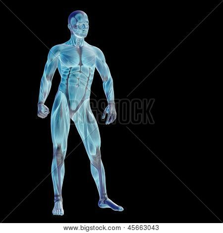 High resolution concept or conceptual human or man 3D anatomy body with muscle isolated on black background as a metaphor to medicine,sport,male,muscular,medical,health,biology or fitness