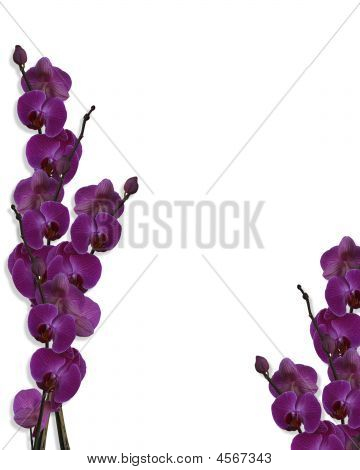Purple Orchids Borders Template