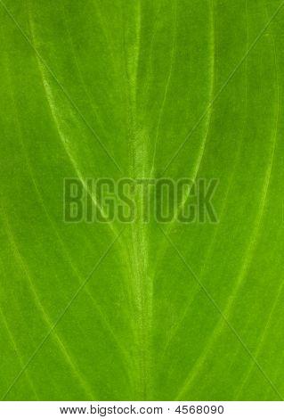 Green Leafs 8