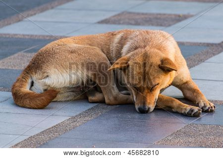 Dog Sleeping On Pedestrian