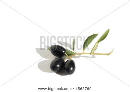 Olives On Branch