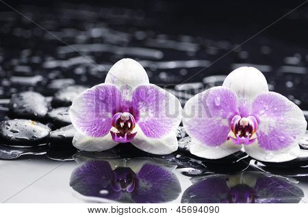 Two gorgeous orchid on stones reflection