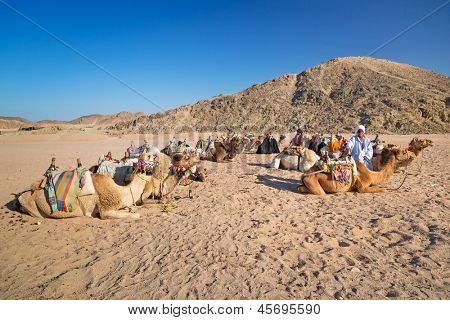 HURGHADA, EGYPT - APR 16: Unidentified bedouin people with camels resting on desert near Hurghada, April 16, 2013. Camel ride on the desert is one of the main local tourist attraction in Egypt.