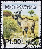A stamp printed in Botswana shows image of a greater kudus