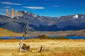 stock photo of pain-tree  - Torres del Paine National Park - JPG