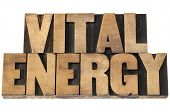 vital energy - isolated text in letterpress wood type printing blocks