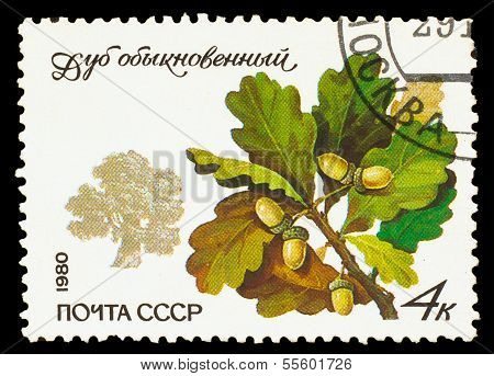 USSR - CIRCA 1980: A stamp printed in USSR, shows Quercus robur,