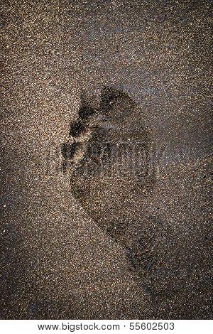 Single Footprint on Brown Beach Sand