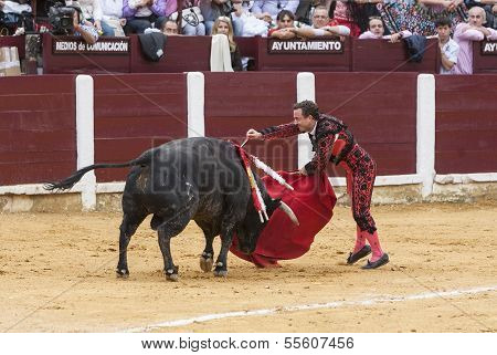 Spainish bullfighter Rafaelillo bullfighting stabbing a bull in the Bullring of Ubeda
