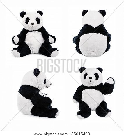 Teddy panda bear