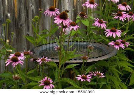 Bird Bath And Cornflowers