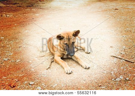 Starving stray dog