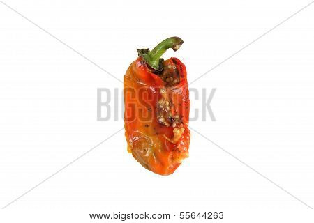 Old Rotten Pepper Isolated On White
