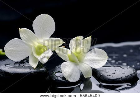 still life with two white orchid with stones