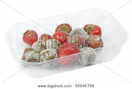 A packet of rotten mouldy strawberries