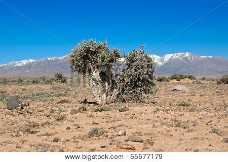 Stony Desert Of Middle Atlas, Morocco