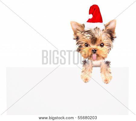 christmas dog as santa with bunner