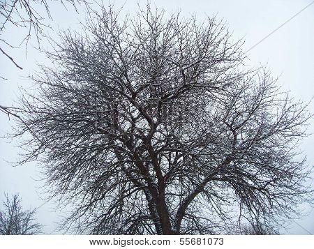 Tree Autumn Winter Cold Slush Dampness