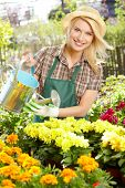 foto of greenhouse  - Florists woman working with flowers at a greenhouse - JPG