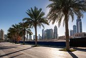 picture of highrises  - Row of palm trees and a modern highrise buildings in Dubai United Arab Emirates - JPG
