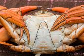 picture of cooked blue crab  - Hot Steamed crab and a red color - JPG