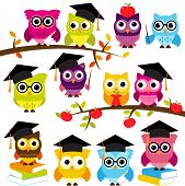image of owls  - Vector Collection of School or Graduation Themed Owls - JPG
