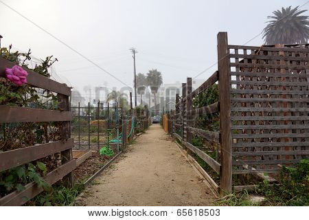 Dirt Path In Community Garden