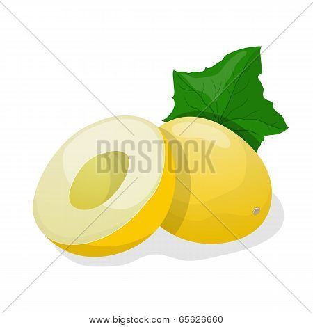 Ripe Melon. Vector Illustration