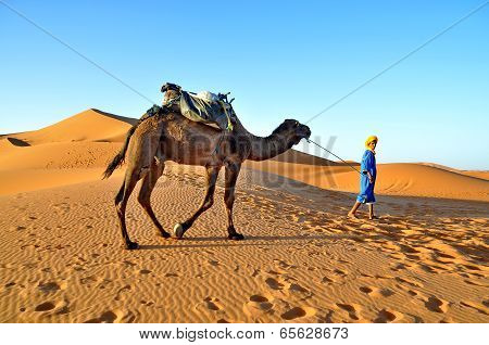 Merzouga Desert - October 01: Man In Traditional  Berber Wear Leads A Camel In Merzouga Desert, Moro
