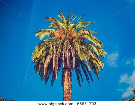 Retro Look Palm Tree