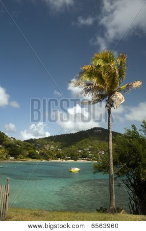 Coconut Tree With Native Fishing Boat Friendship Bay Bequia St. Vincent