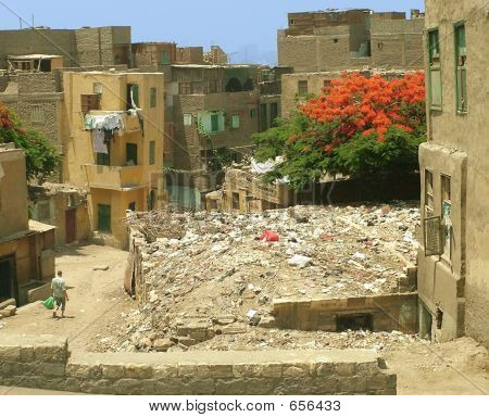 Baghdad In Bloom