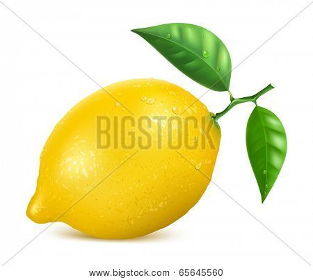 Fresh yellow lemon with leaves and water drops. Vector illustration.