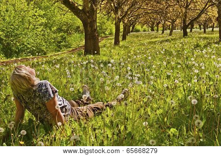 Woman sitting in a grove of trees and meadow in the sun