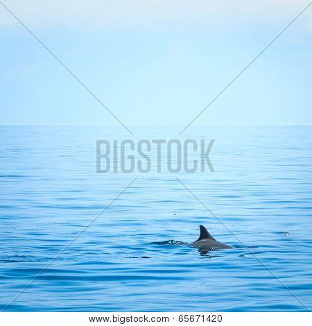 Fin Of A Shark