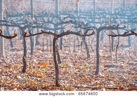 Malbec In Late Autumn