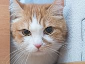 pic of animal cruelty  - Portrait of yellow scared cat hiding at home - JPG