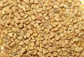 pic of fenugreek  - Close up of bunch of whole fenugreek seed - JPG