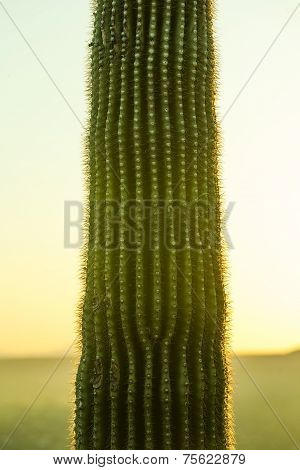 Sunset With Beautiful Green Cacti In Landscape