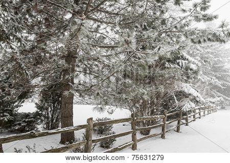 Snowy winter landscape with rural wooden fence and snow covered pine tree