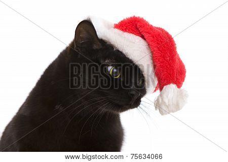 Black Cat Santa - Cute Christmas Cat, Christmas Pet With Santa Claus Hat