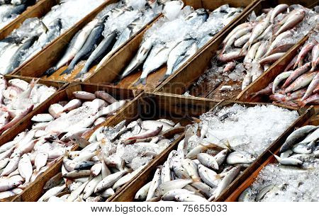 Fresh Fishes In Fish Market