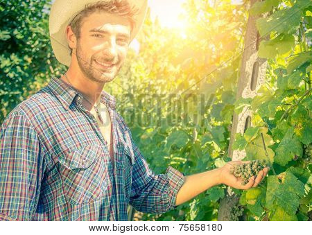 Man In A Vineyard