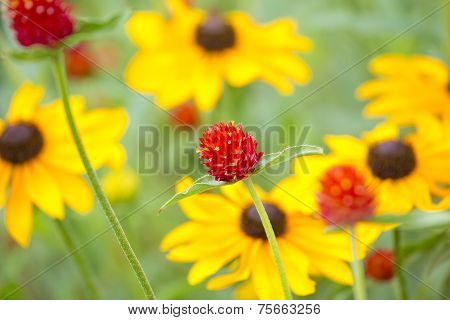 red in front of yellow